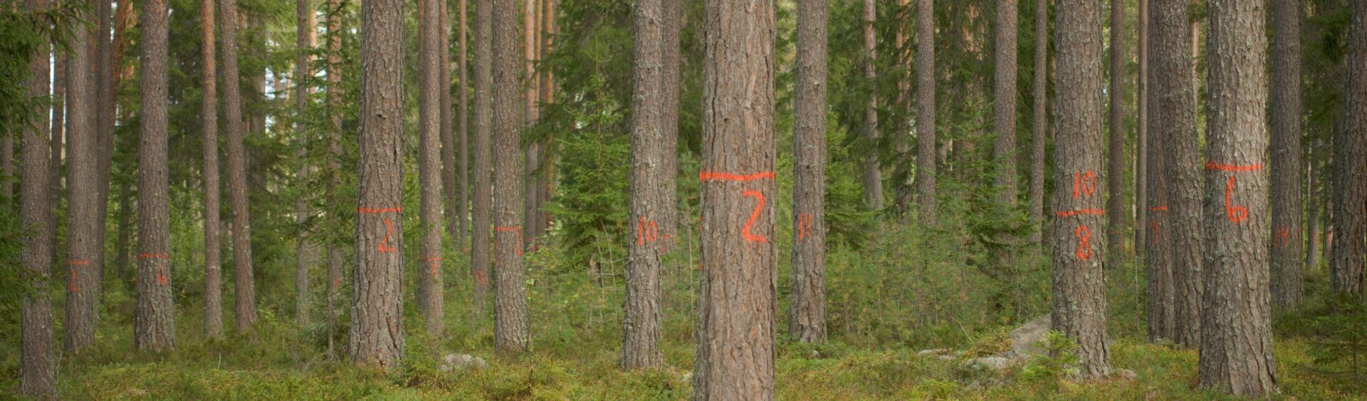 Virkesinköpare Södra Dalarna